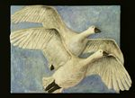 Flying Swans